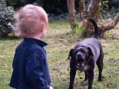 Cane morde bambino