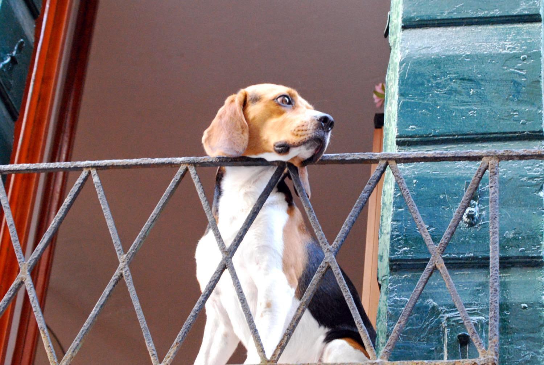 Condominio, lasciare da solo in balcone il proprio cagnolino è reato ...